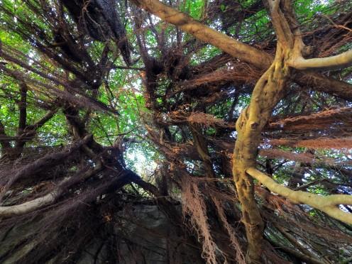 viet-bay-arbre