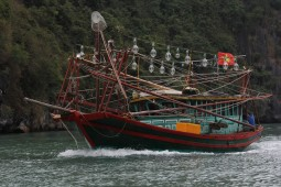 viet-bay-pecheur-calamar