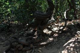 viet-cu-chi-jungle
