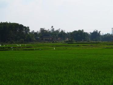 viet-hoi-an-rizières