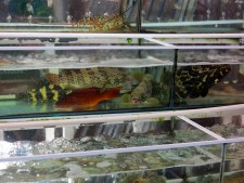 viet-phu-quoc-duong-dong-fish-3