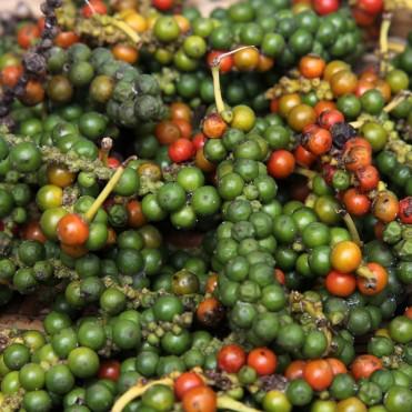 Poivre vert e rouge (maturité des grains)