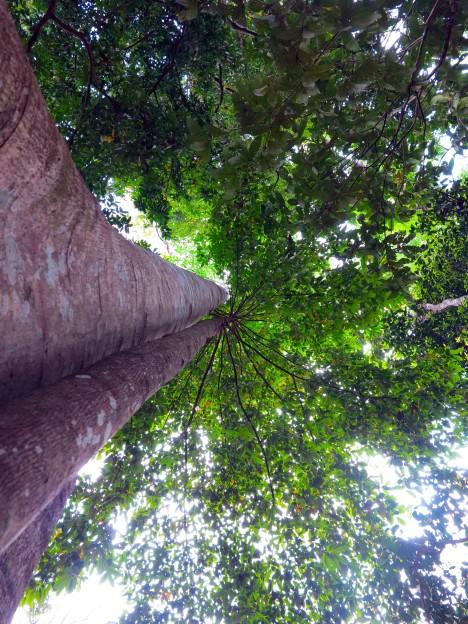 laos-luang-prabang-kuang-si-falls-9