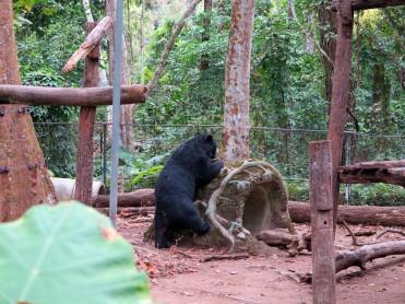 laos-luang-prabang-ours