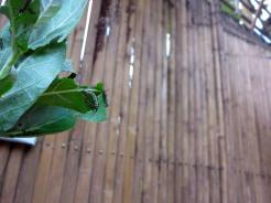 laos-luang-prabang-papillon-sanctuaire-2