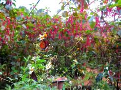 laos-luang-prabang-papillon-sanctuaire-3