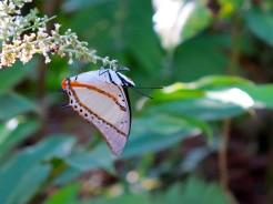 laos-luang-prabang-papillon-sanctuaire-4