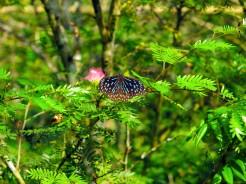 laos-luang-prabang-papillon-sanctuaire-5