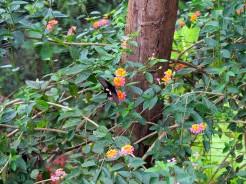 laos-luang-prabang-papillon-sanctuaire-6