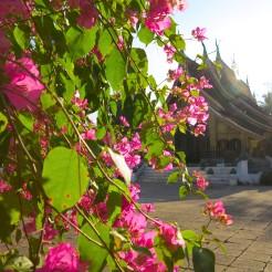 laos-luang-prabang-temple-16
