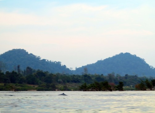 laos-4000-iles-boat-dauphins-1