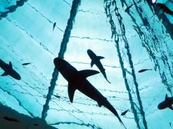 sin-aquarium-3