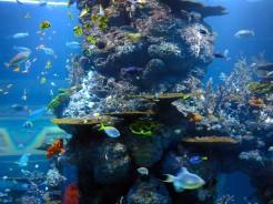 sin-aquarium-4