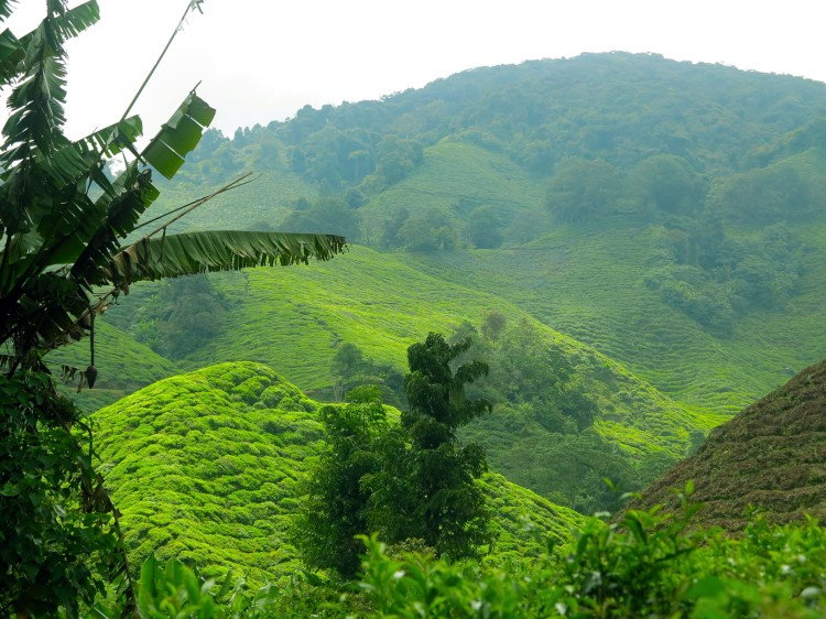 mal-cameron-highlands-13