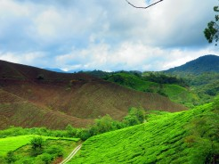 mal-cameron-highlands-8