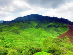 mal-cameron-highlands-9