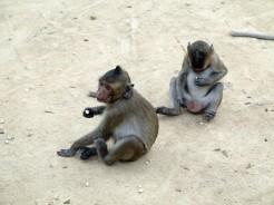 thai-ayu-monkey-2