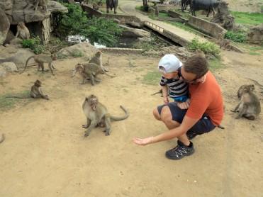thai-ayu-monkey-3