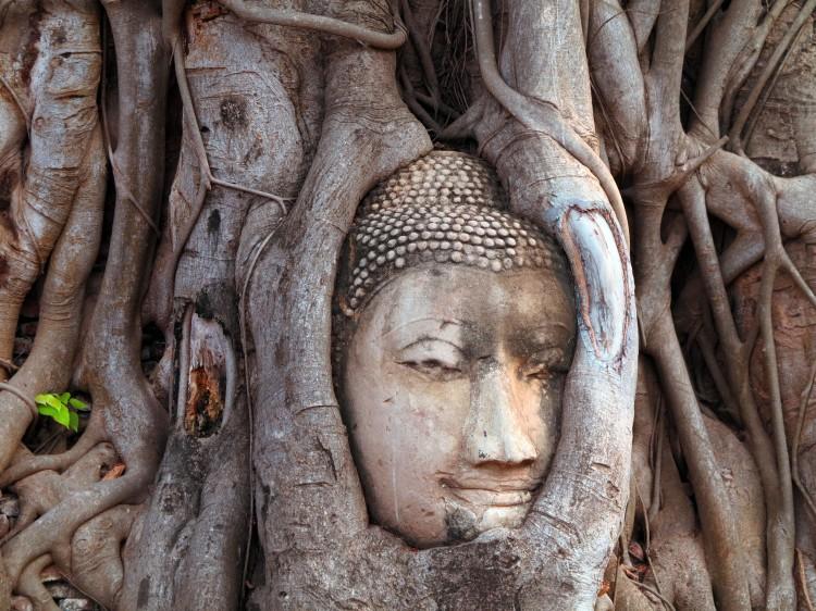thai-ayu-wat-mahathat-5