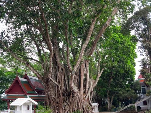 thai-chiang-mai-bhubing-palace-1