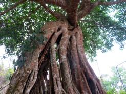 thai-chiang-mai-bhubing-palace-9