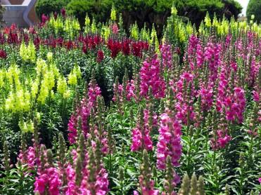 thai-chiang-mai-pagode-fleurs-2