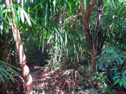 thai-ko-lanta-waterfall-3