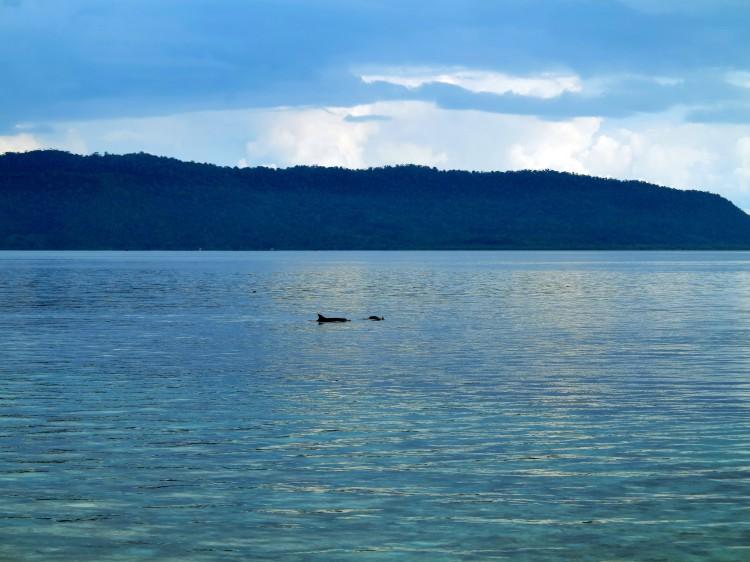 indo-raja-dauphins