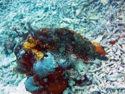 Poisson scorpion