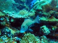 indo-raja-snorkling-4