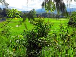 indo-sulawesi-risiere-3