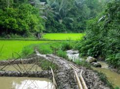 indo-sulawesi-rizierre-6