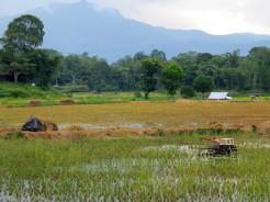 indo-sulawesi-rizierre-7