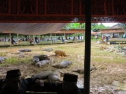 indo-sulawesi-tanah-toraja-enterrement-5