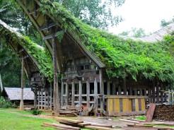 indo-sulawesi-tanah-toraja-maison-vegetalisee-2
