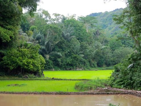 indo-sulawesi-tanah-toraja-rizierre-5