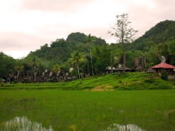 indo-sulawesi-tanah-toraja-village