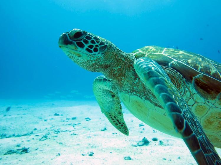 IMG_7973-turtles-1