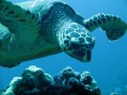 IMG_8433-turtles-2