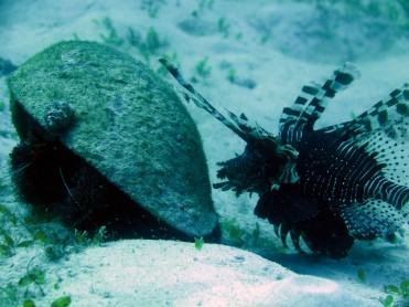 Poisson scorpion et Bernard