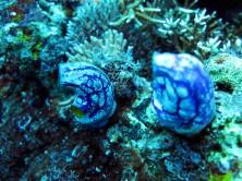 indo-flores-dive-coraux
