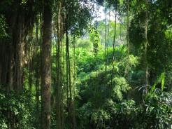 indo-bali-ubud-monkey-temple-3