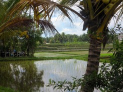 indo-bali-ubud-riziere-1
