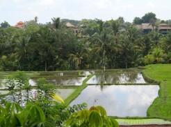 indo-bali-ubud-riziere-2