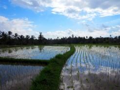 indo-bali-ubud-riziere-8