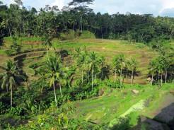indo-bali-ubud-riziere-9